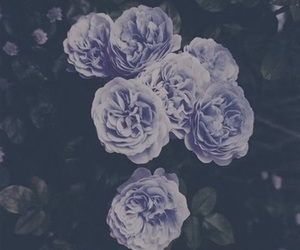 rosas, roses, and vintage image