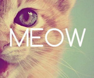 cat, meow, and animal image
