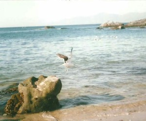 beach, calm, and chile image
