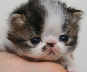 adorable, animal, and kittens image
