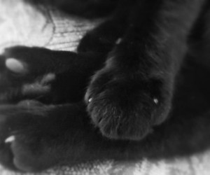 cats, paws, and black&white image