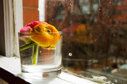 deco, flower, and flowers image