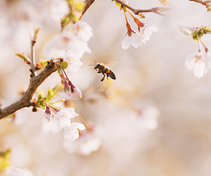 flowers, bee, and blossom image