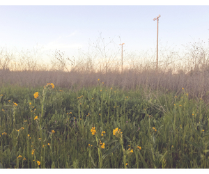 california, grunge, and field image