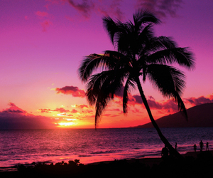 amazing, ocean, and palmtree image