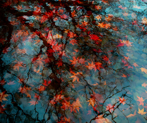 autumn, orange, and water image