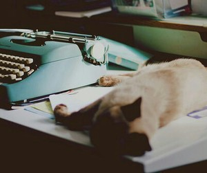 cat, table, and cute image
