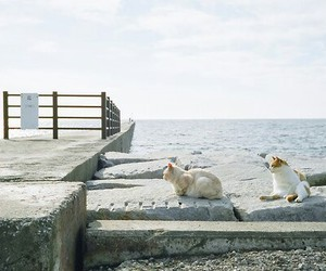 cat, lovely, and sea image