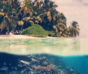 bora bora, water, and summer image