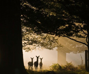 deer, forest, and animal image