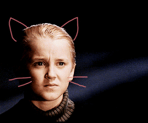 harry potter, draco malfoy, and cat image
