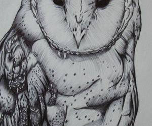 buho drawing pencil image