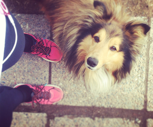good morning, jogging, and sheltie image