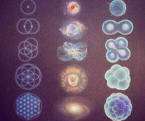cells, cosmos, and life image