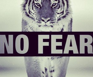 fear and tiger image