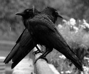 bird, black and white, and animal image