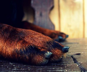 black, brown, and paws image