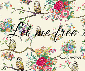 birds, free, and girls image