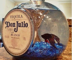 tequila, betta, and diy image