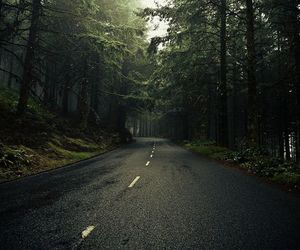 road, forest, and photography image