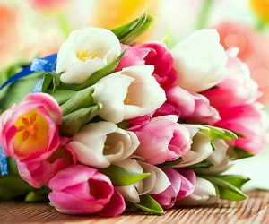 colorful summer tulips image