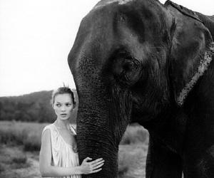 elephant, kate moss, and model image