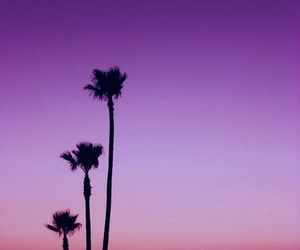 sunset, palms, and tropical image