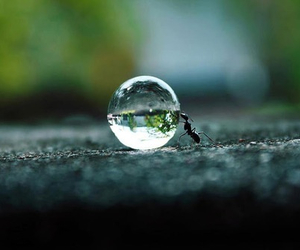 ant, cool, and nature image