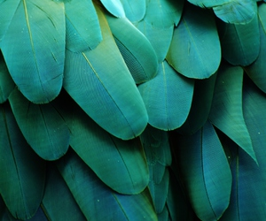 feather, green, and bird image