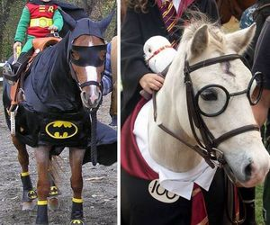 horse and harry potter image