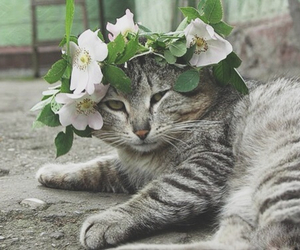 animal, flowercrown, and cat image