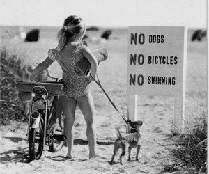 beach, bicycles, and tumblr image