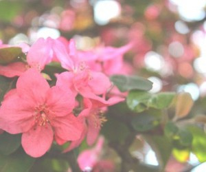 flowers, pink, and wonderful image