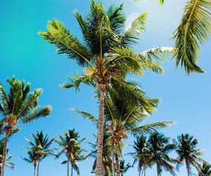 blue sky, tropical, and coconut trees image