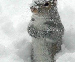 snow, winter, and squirrel image