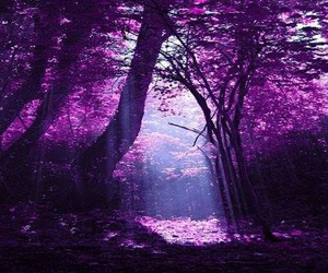 purple, nature, and forest image