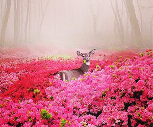 amazing, cover, and deer image