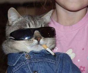 animal, cat, and soft grunge image