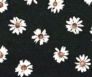 wallpaper, flowers, and daisy image