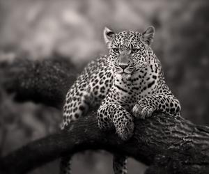 tree wild cat image