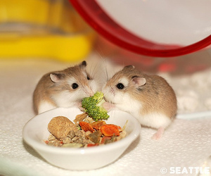 hamster, cute, and food image