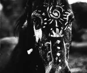 paint and indian horse love image