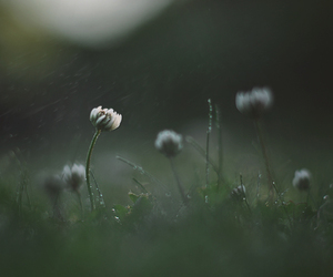 dew, flowers, and little things image