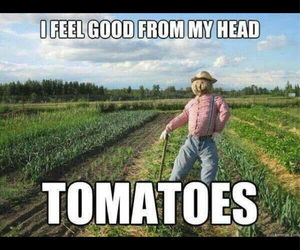 nature, veggie, and funny image