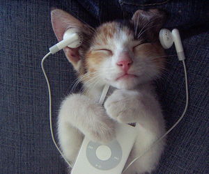 cat, music, and Dream image