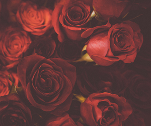 rose, beauty, and passion image