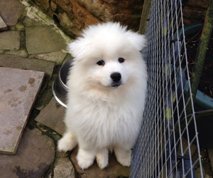 beautiful, dog, and fluffy image