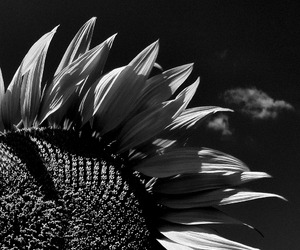 b&w, black and white, and flor image