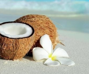 coconut and summer image