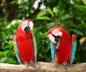 animal, parrot, and summer image